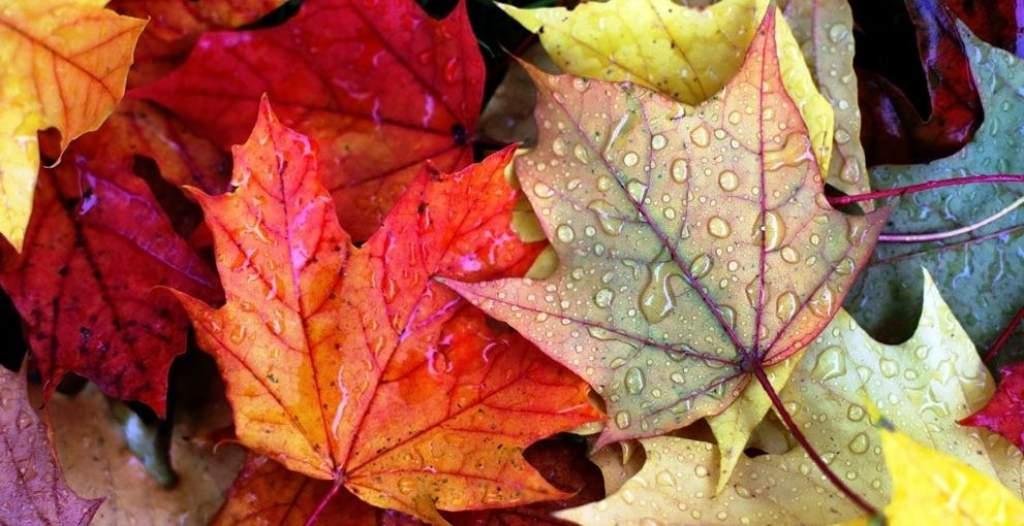 Zöld oldal - Itt van az ősz, itt van újra