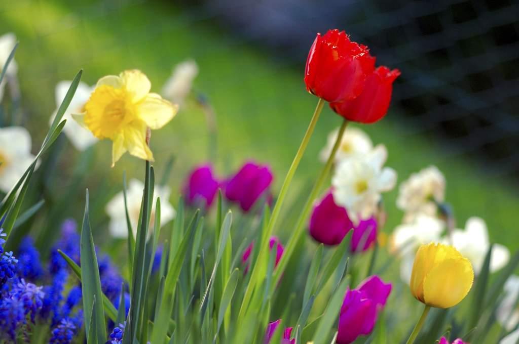 Tavaszi virágünnep a Korona utcában
