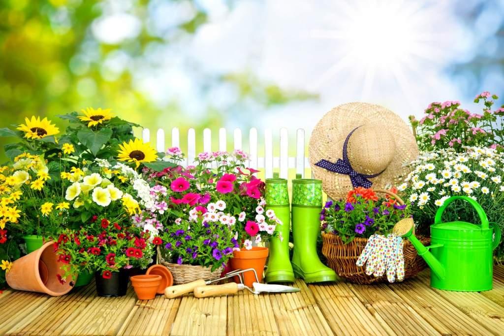 Várják a nevezéseket a Virágos Félegyházáért versenyre