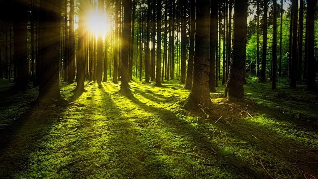 Erdőtelepítés a klímaváltozás ellen