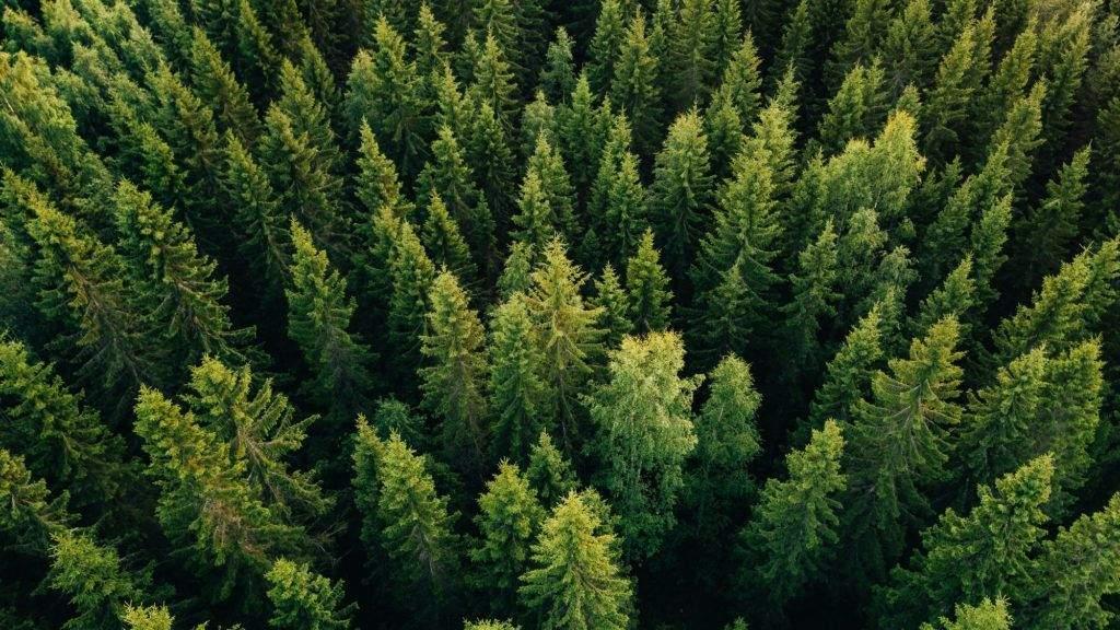 1 milliárd hektár új erdő ültetésével mentenék meg a Földet