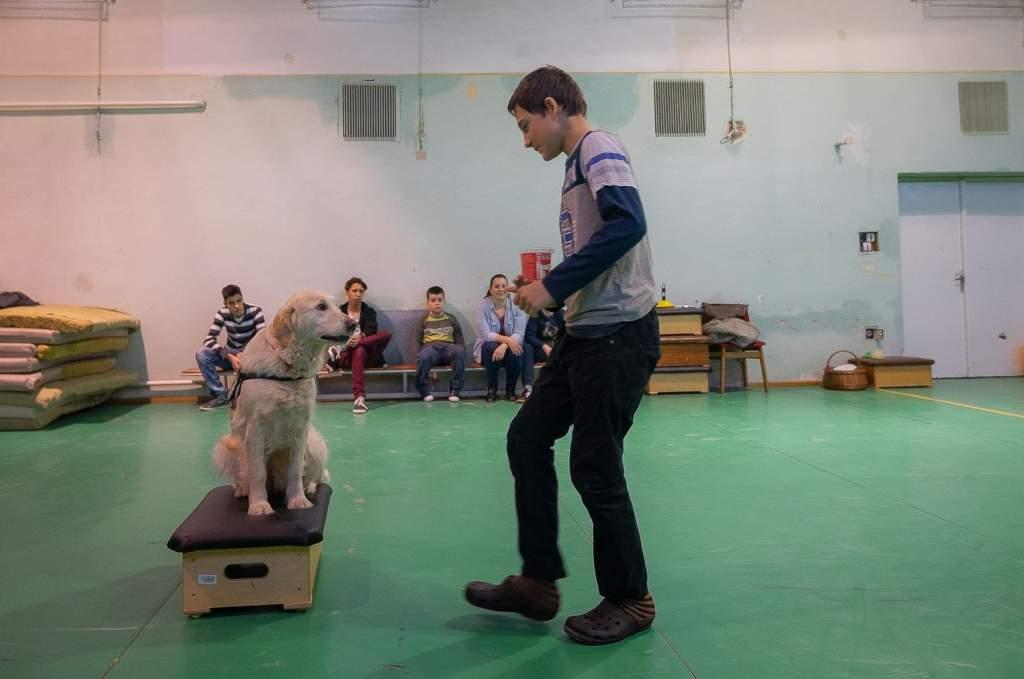 Terápiás kutyával az erőszak- és agressziókezelésért