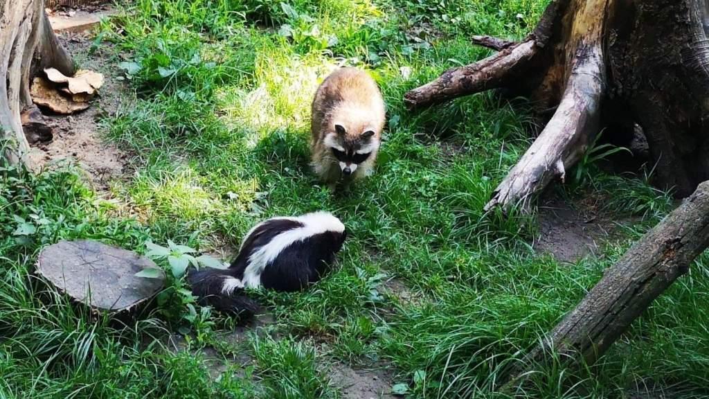 Augusztus 30-án van az Állatkertek éjszakája