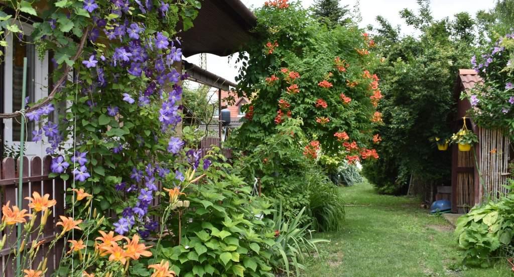 Ajándékot kaphat, aki véleményt mond a Virágos Félegyháza kertjeiről