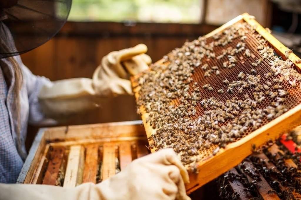 Újabb támogatásra repülhetnek rá a méhészek