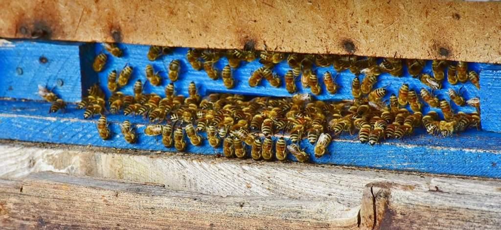 Világhírű a magyar méz