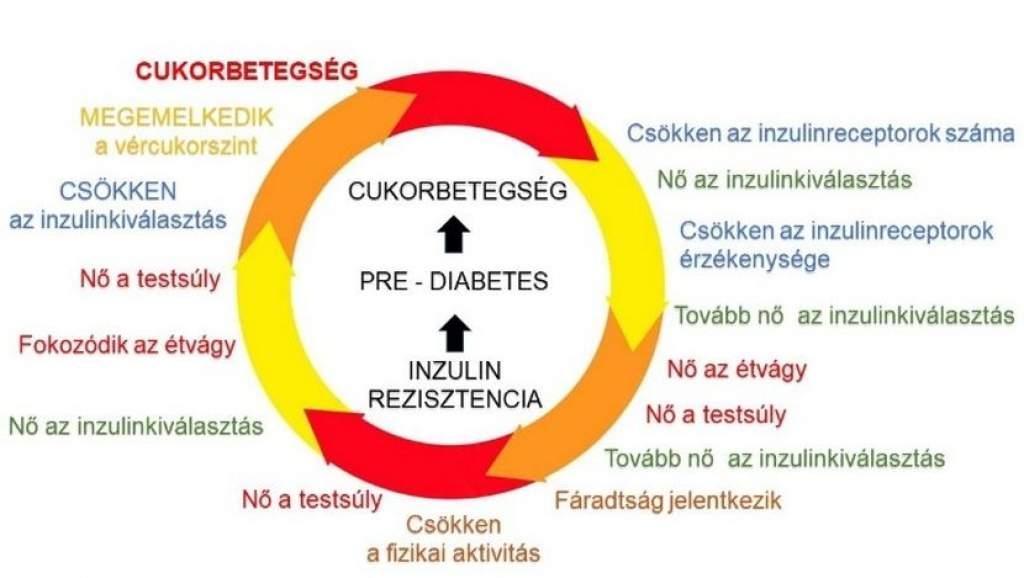 Az inzulinrezisztenciáról mindenkinek