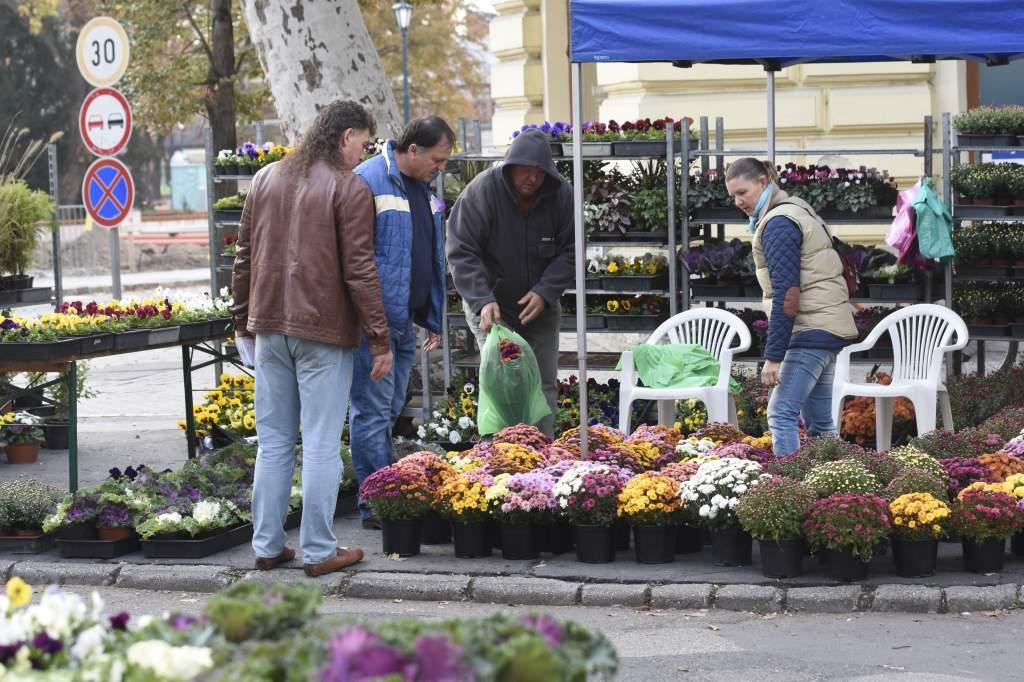 Gazdag kínálat az őszi virágvásáron