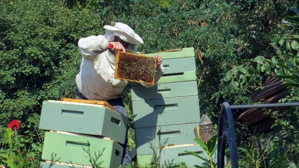 Több pénzt kapnak jövőre a méhészek