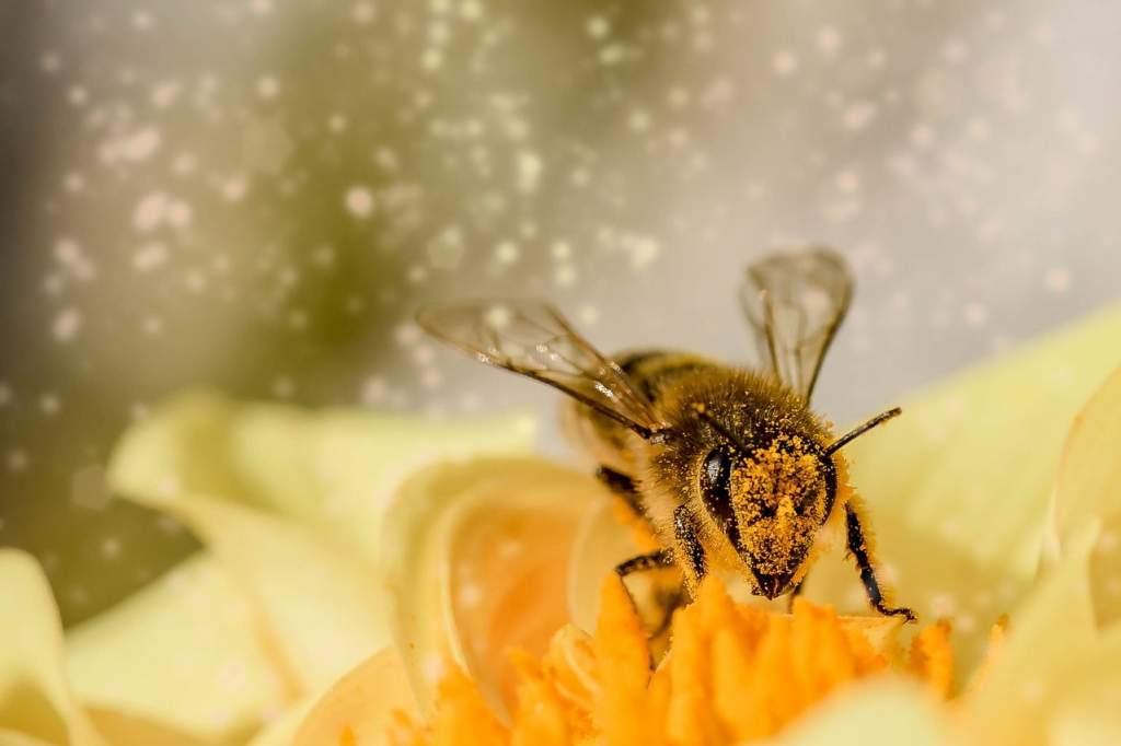 Több támogatást kapnak a méhészek
