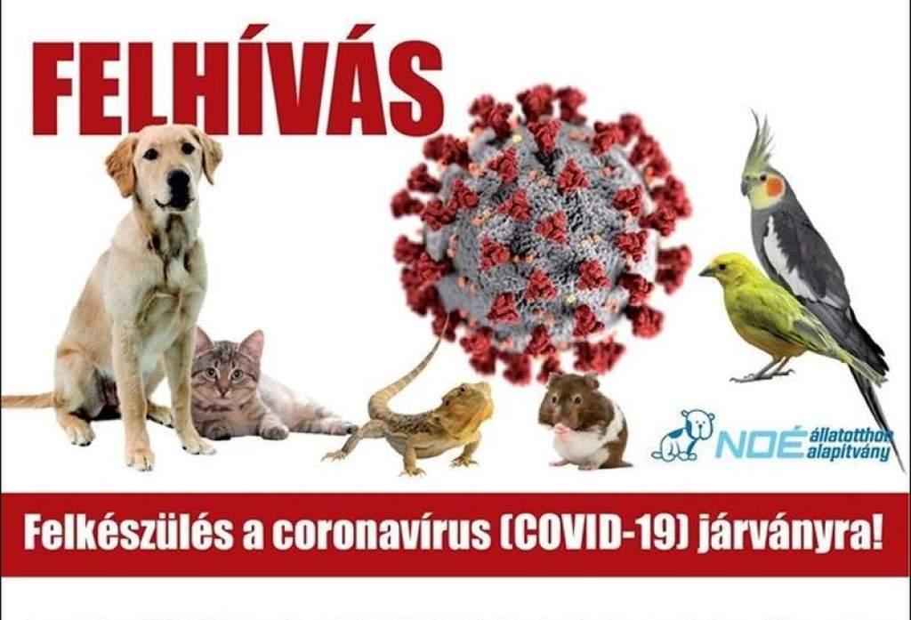 Járványügyi tanácsok állattartóknak