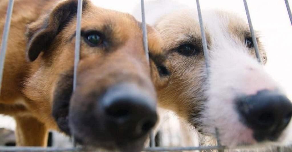 Zavartalan az elárvult kutyusok gondozása