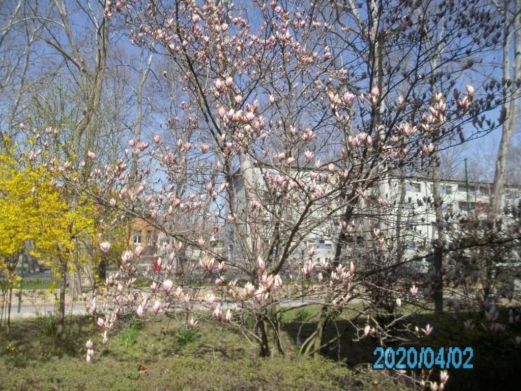 Megérkezett a tavasz