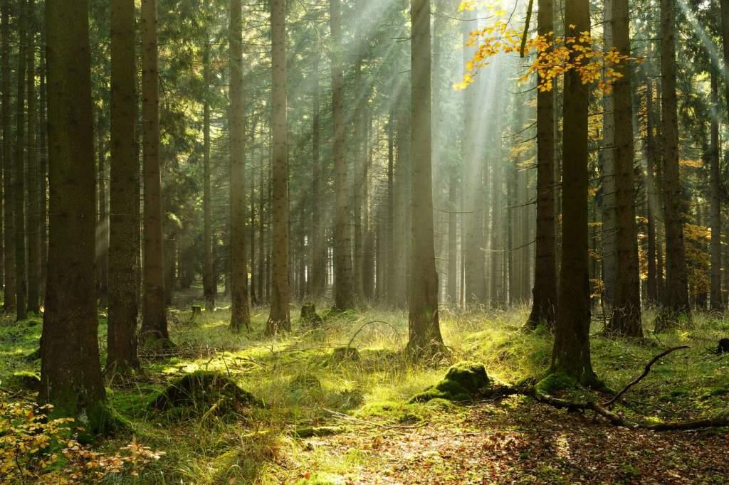 Aki az erdőt óvja életet ment!