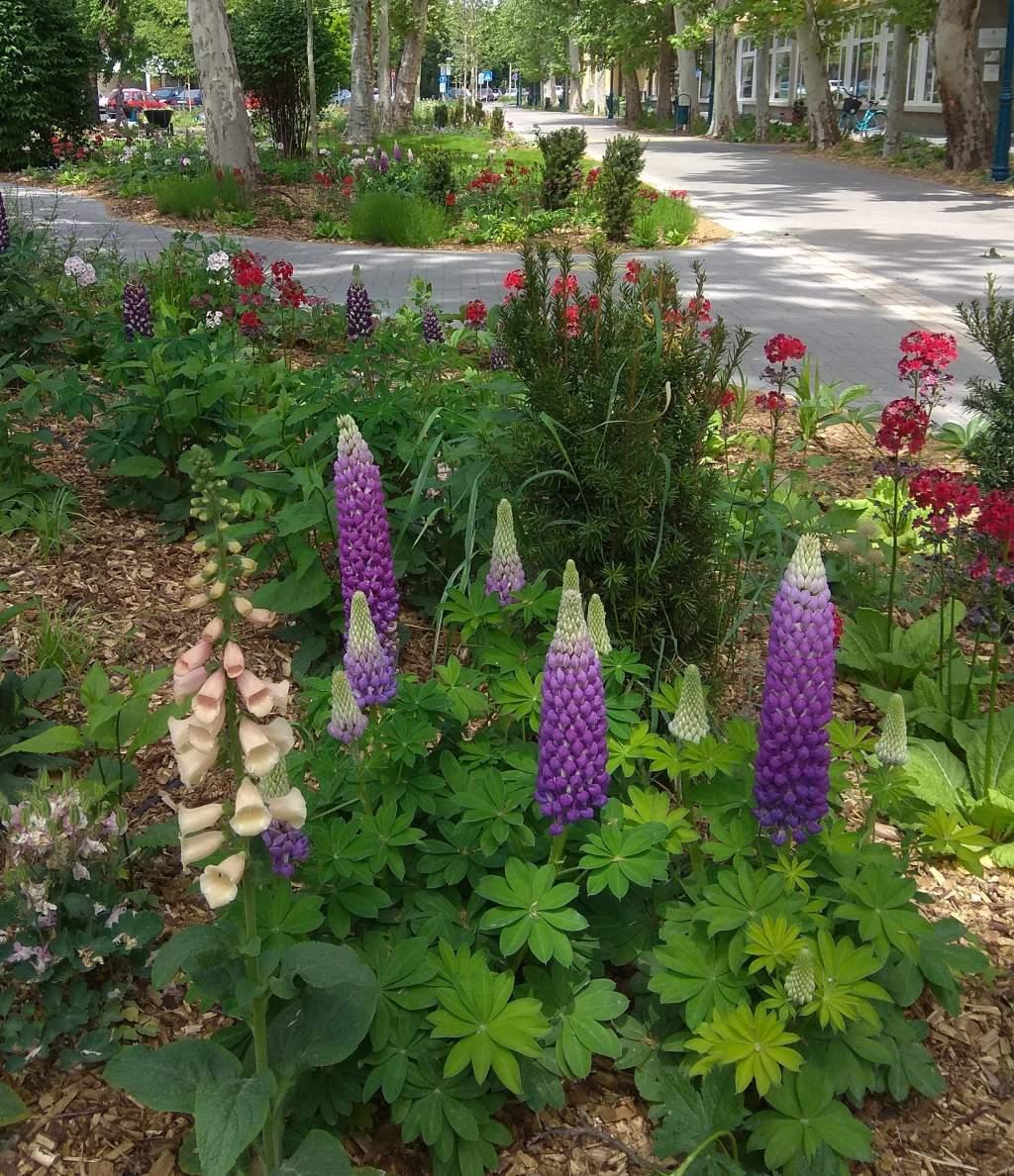 Zöld hírek – Félegyháza virágai