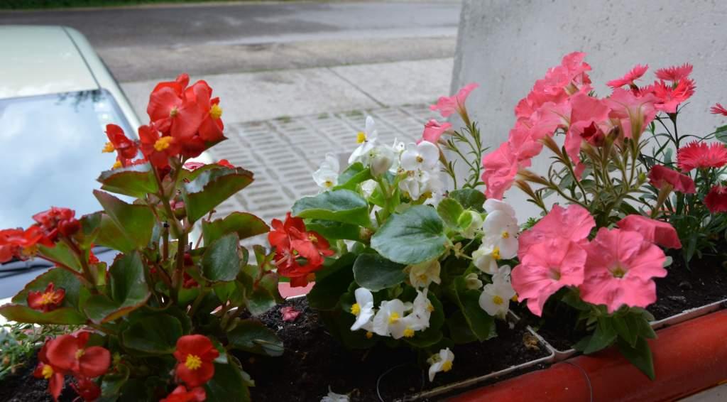 Kedvenc virágaim