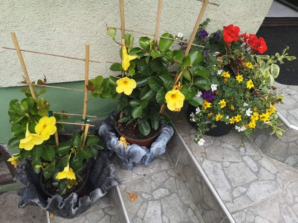 Jótanácsok növényvédelemből