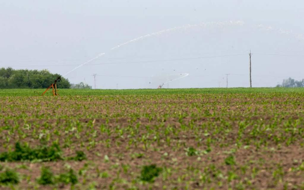 Későn jött az eső, a felhőszakadások nem tettek jót a növényeknek