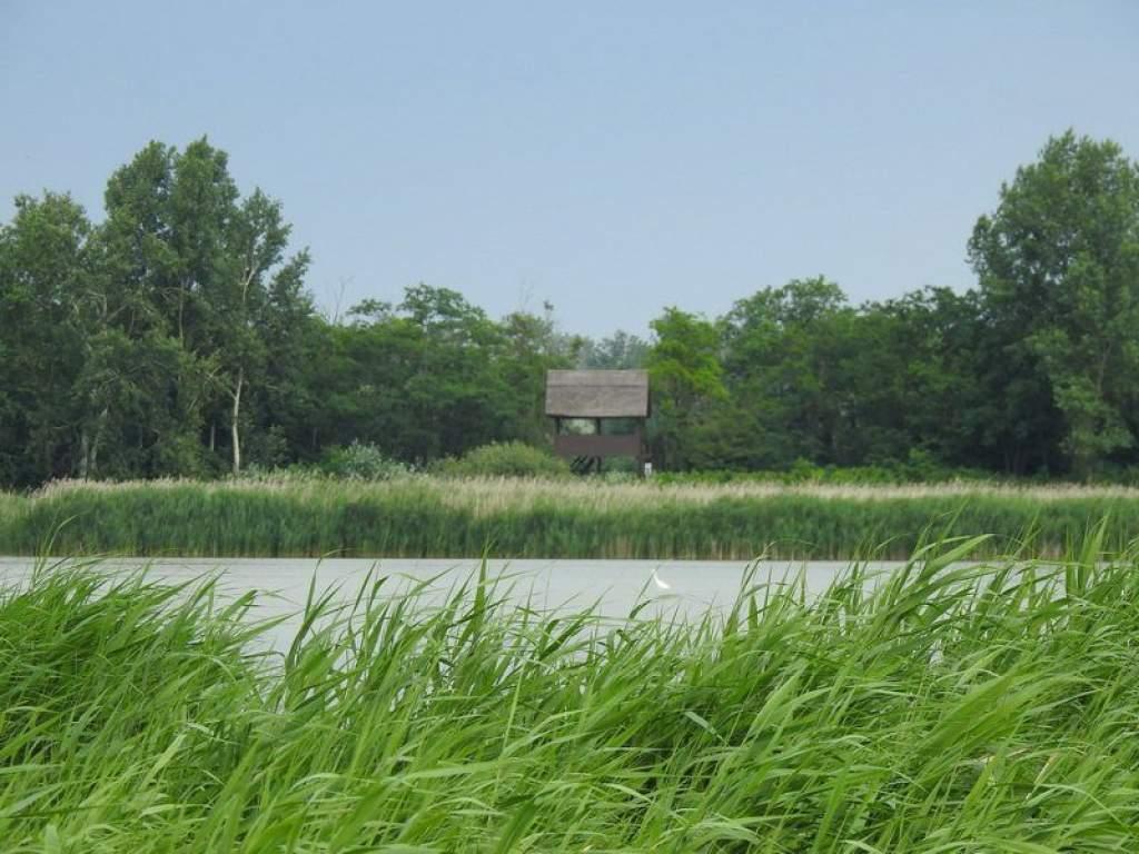 Hamarosan újjászületik a Péteri-tó