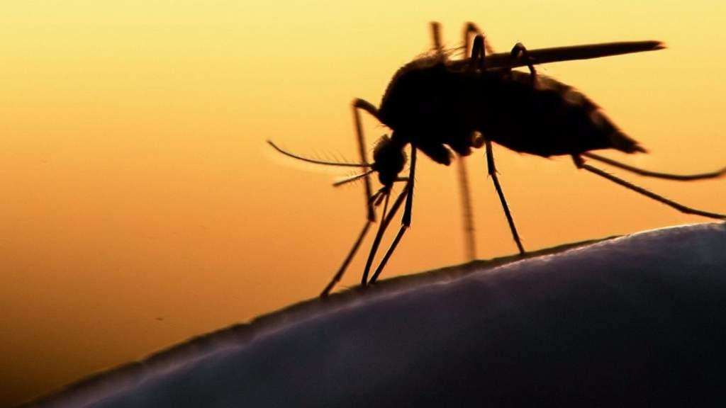 Csütörtökön lesz a szúnyogirtás Félegyházán