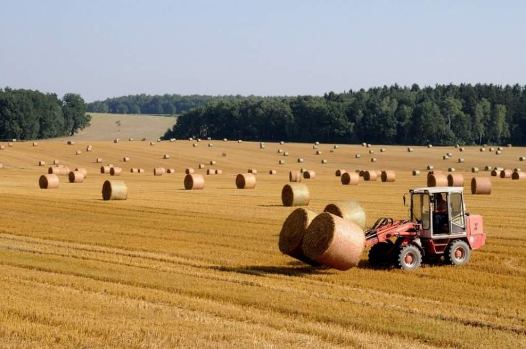 Nehéz évük van a gabonatermelőknek