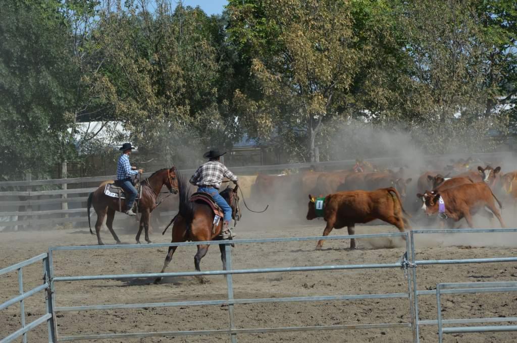 A hétvége a westernlovasoké a Fekete Lovastanyán