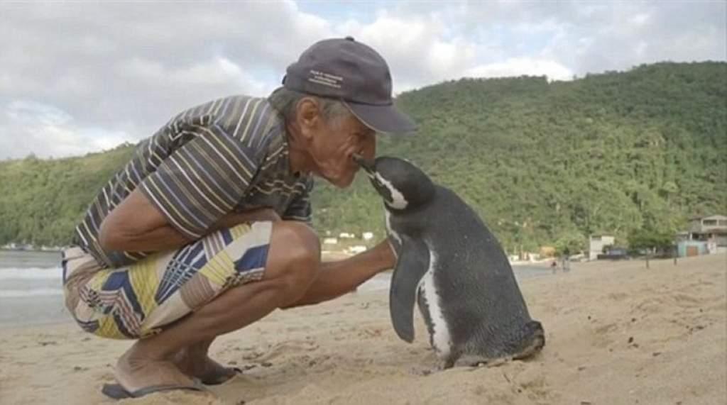 Minden évben 8000 km-t úszik a pingvin, hogy találkozzon a megmentőjével– videóval