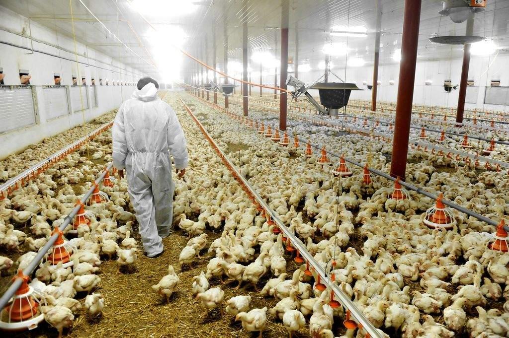 Ismét megjelent a madárinfluenza Bács-Kiskunban