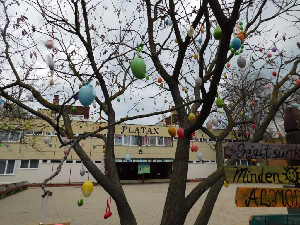Szemrevaló tojásfa áll a Platán iskola udvarán