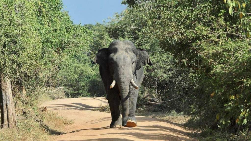 Veszélyeztetett állatokat védő lövésdetektort fejlesztettek ki az SZTE kutatói
