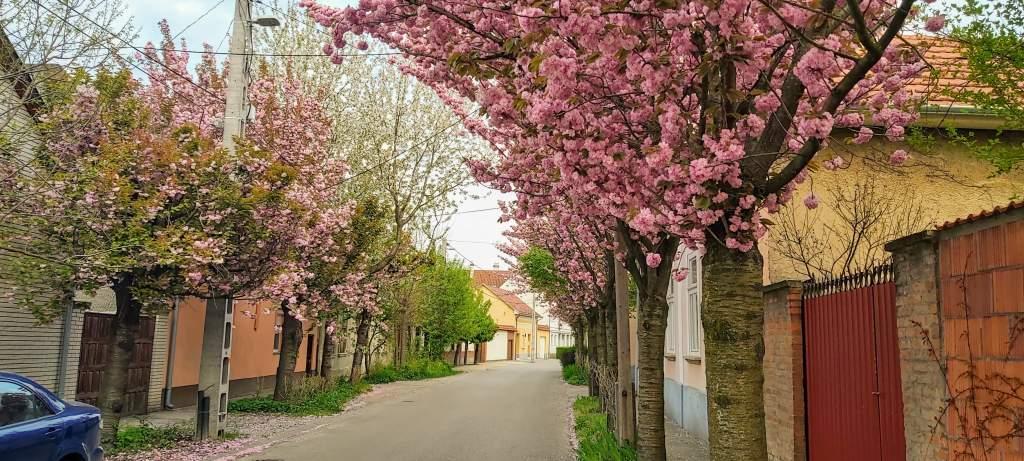 A Wesselényi utca áprilisi csodái