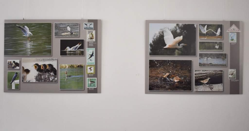 Madarak fotókon és nemzetközi bélyegeken kiállítás a Hattyúházban