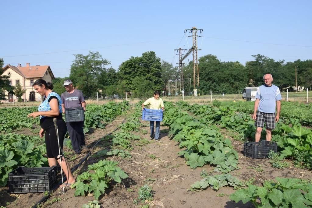 Önkormányzati zöldségtermesztés