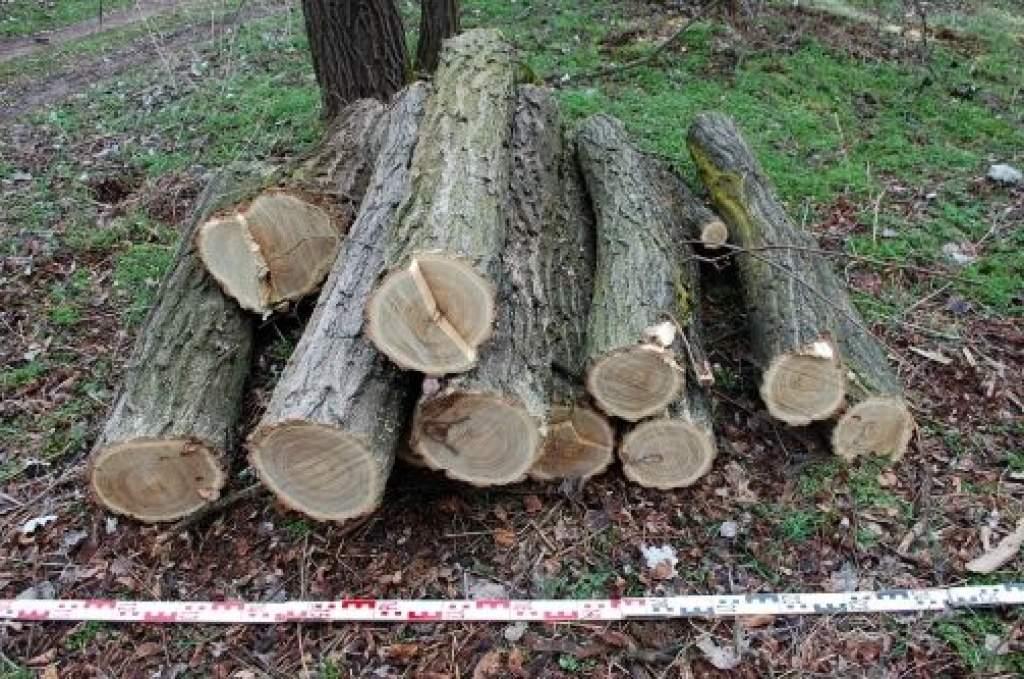 Erdőbe menekült a fatolvaj a körzeti megbízott elől