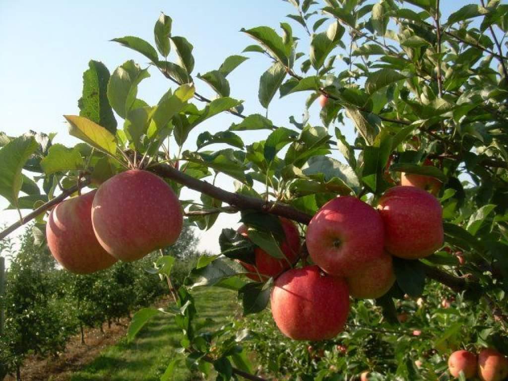 Ígéretes a tavasz a gyümölcsösökben