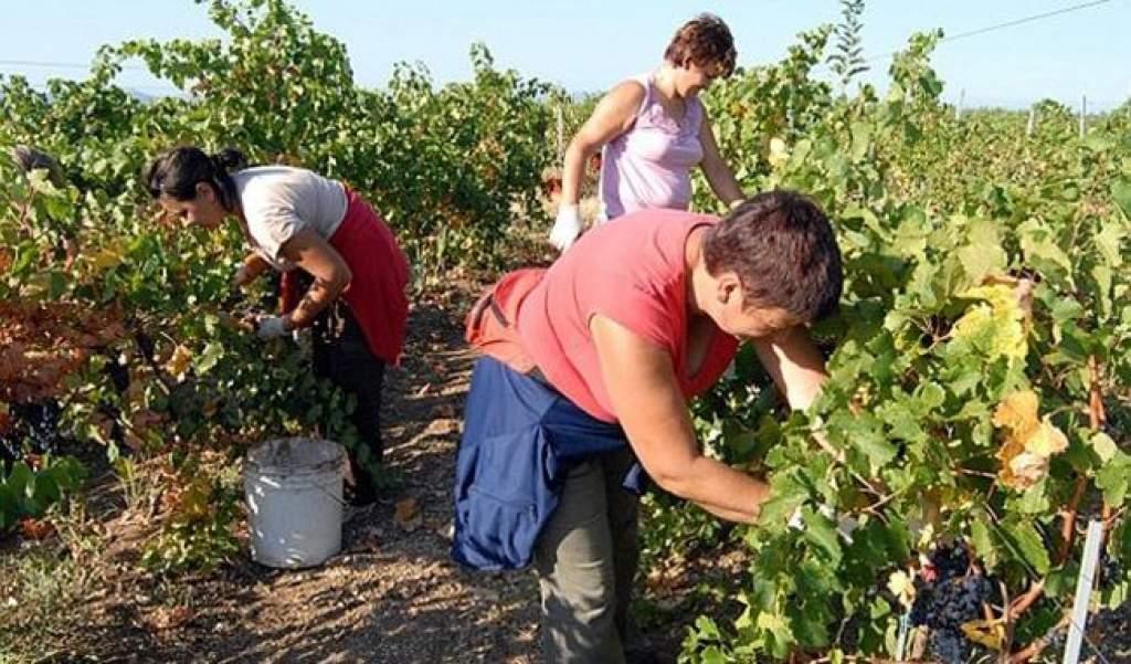 A mezőgazdasági idénymunka bejelentésének szabályai