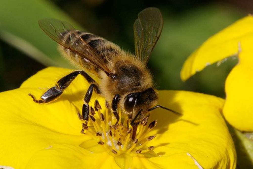 Százezrek életébe kerülhet a méhek pusztulása