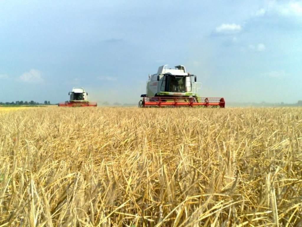 Befejeződik a búza aratása az országban