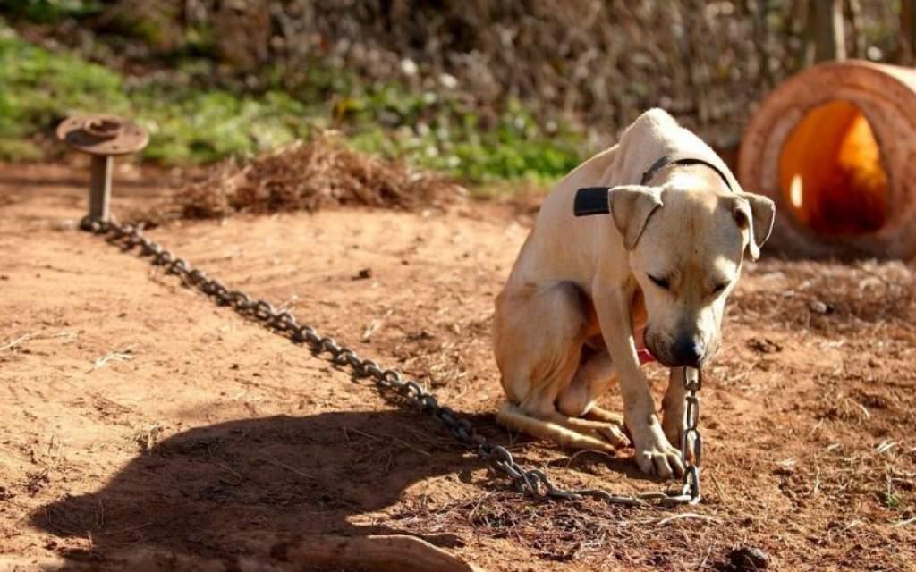 Tilos lesz láncon tartani a kutyákat