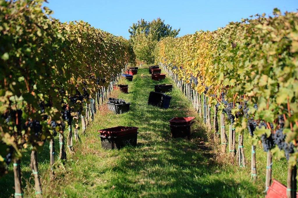 Jól járnak a borászok a vidékfejlesztési programmal