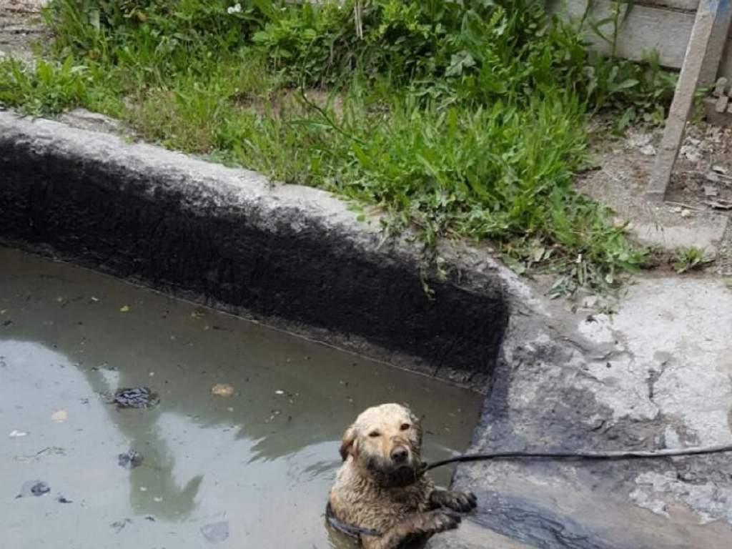 Kutya baja lett