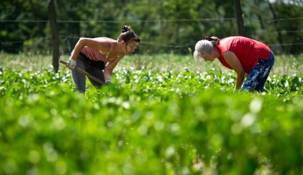 Újabb 40 milliárd forint jut az agrár-környezetgazdálkodási programra