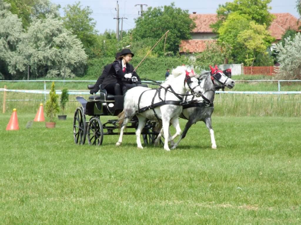 Hosszútávú terveiket szeretnék megvalósítani a félegyházi lovasok
