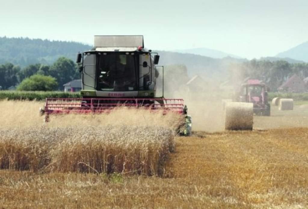 Nagyon jó gabonatermés várható az idén