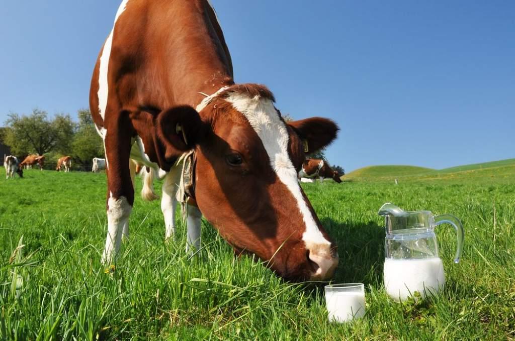Mentőöv a tejtermelőknek