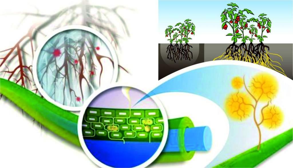 A növények csúcsrajáratása