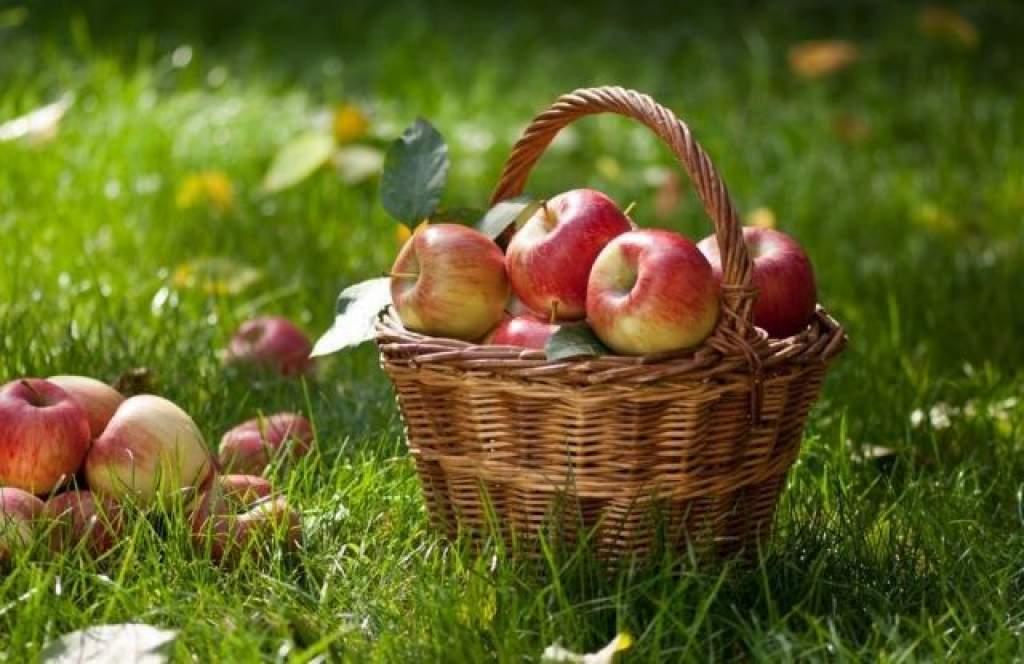 Gyenge közepes almatermés várható