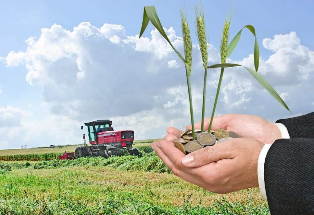 Pályázati tanácsadó hálózatot hoz létre az agrárkamara
