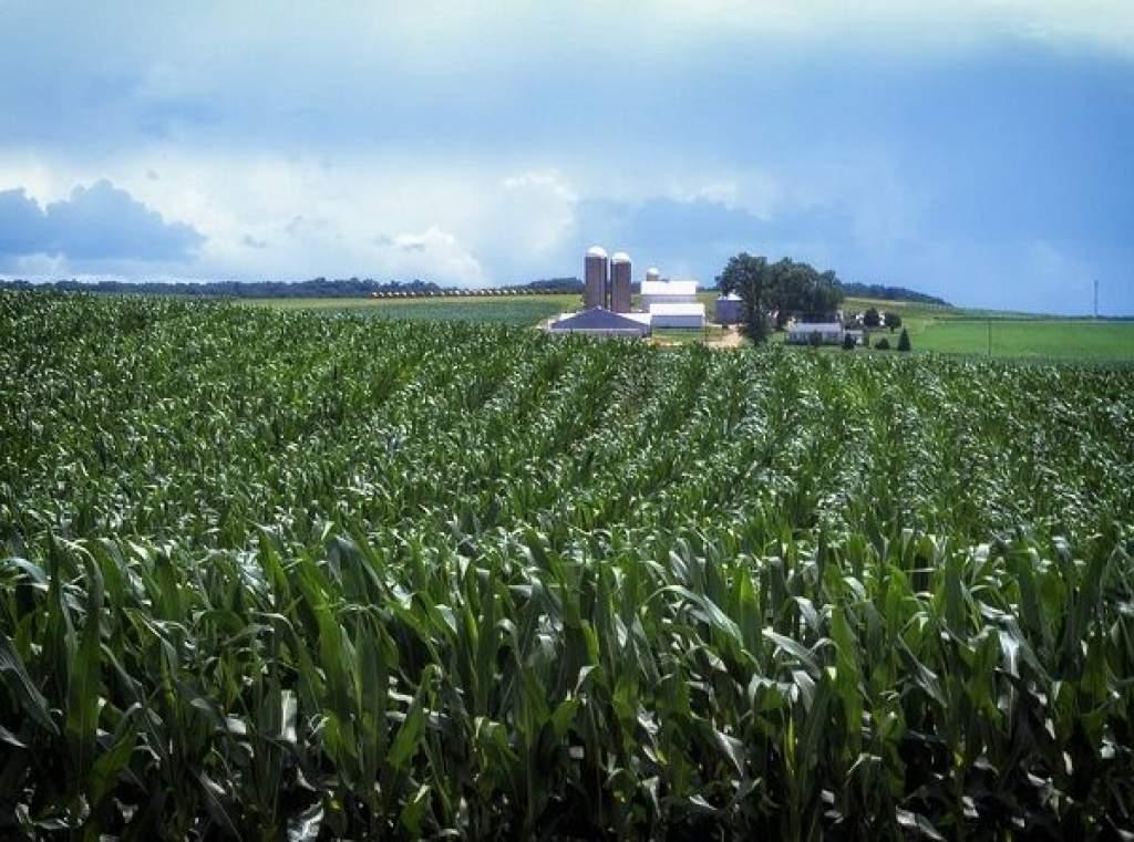 Gyengébb évre számíthatnak idén a gabonatermesztők