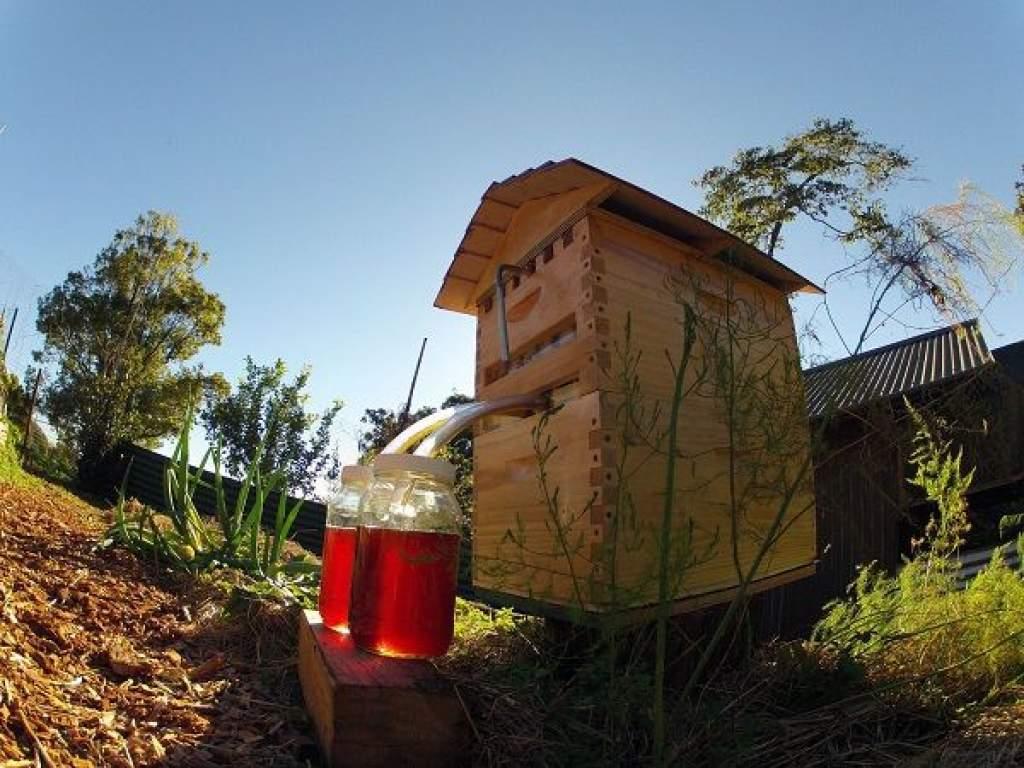Innovatív kaptárral lesz egyszerűbb a méhészkedés